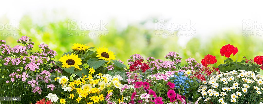 Flowers in garden stock photo