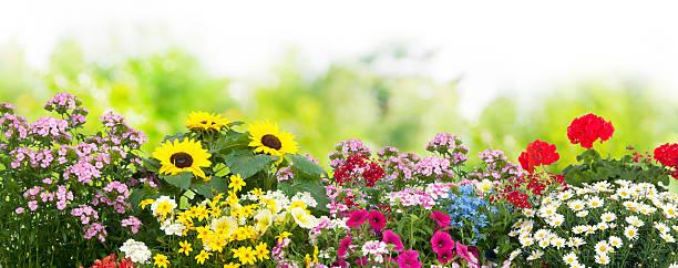 Blumen im Garten  – Foto