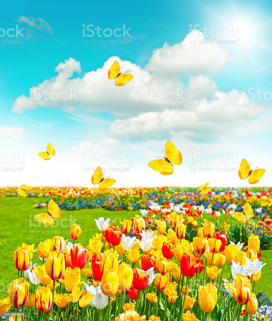 green grass blue sky flowers. Flowers In Green Grass. Spring Landscape With Blue Sky Royalty-free Stock Photo Grass D