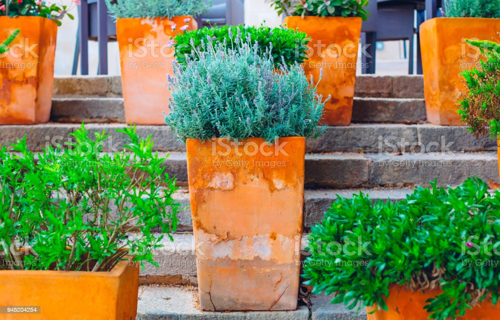 Flowers in large colorful clay pots on the steps stock photo