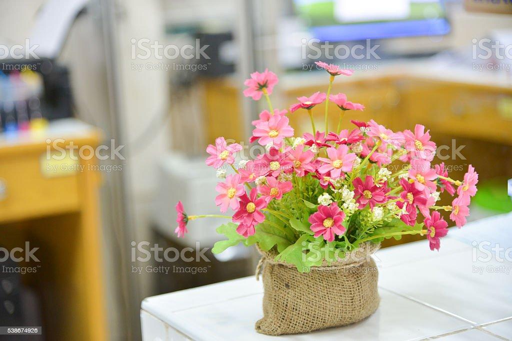 ромашка фото цветов на даче