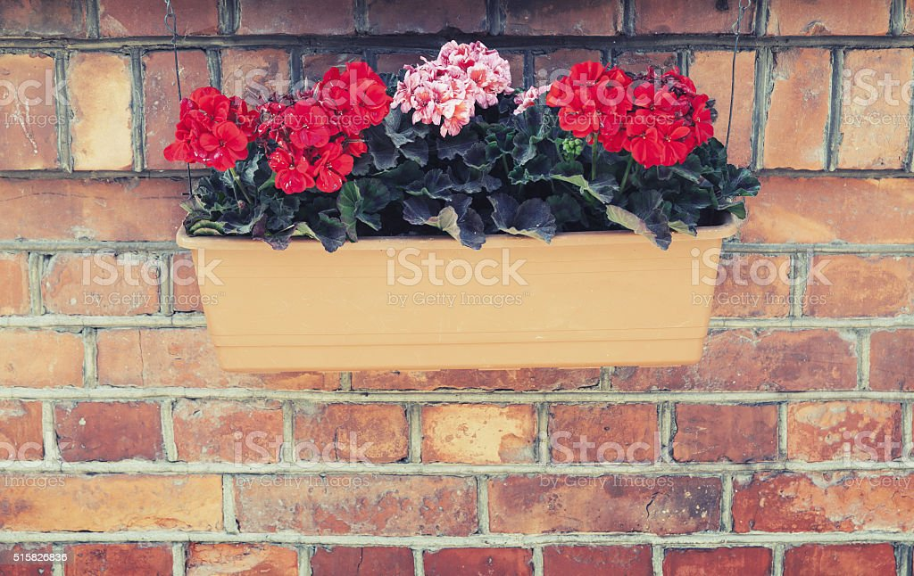 Flowers in outdoor box hanging on red brick wal stock photo