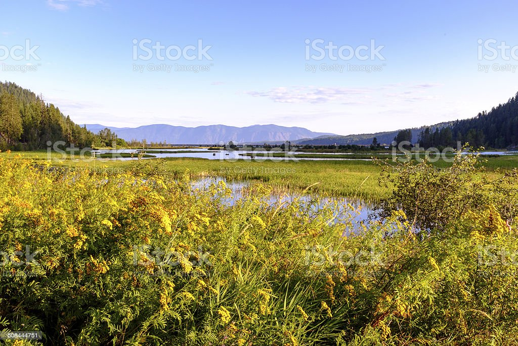 Flowers in Pack River Delta stock photo