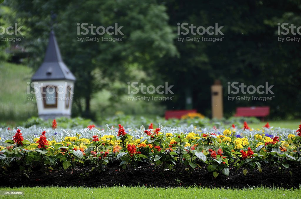 flowers in park royalty-free stock photo