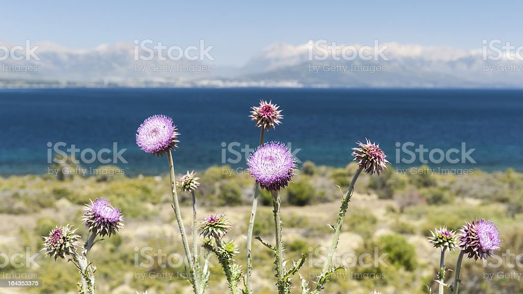 Flowers in Patagonia royalty-free stock photo