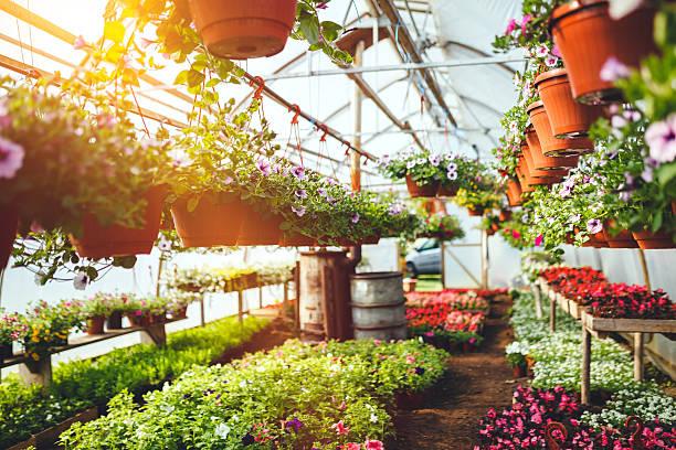 Flowers in plant nursery stock photo