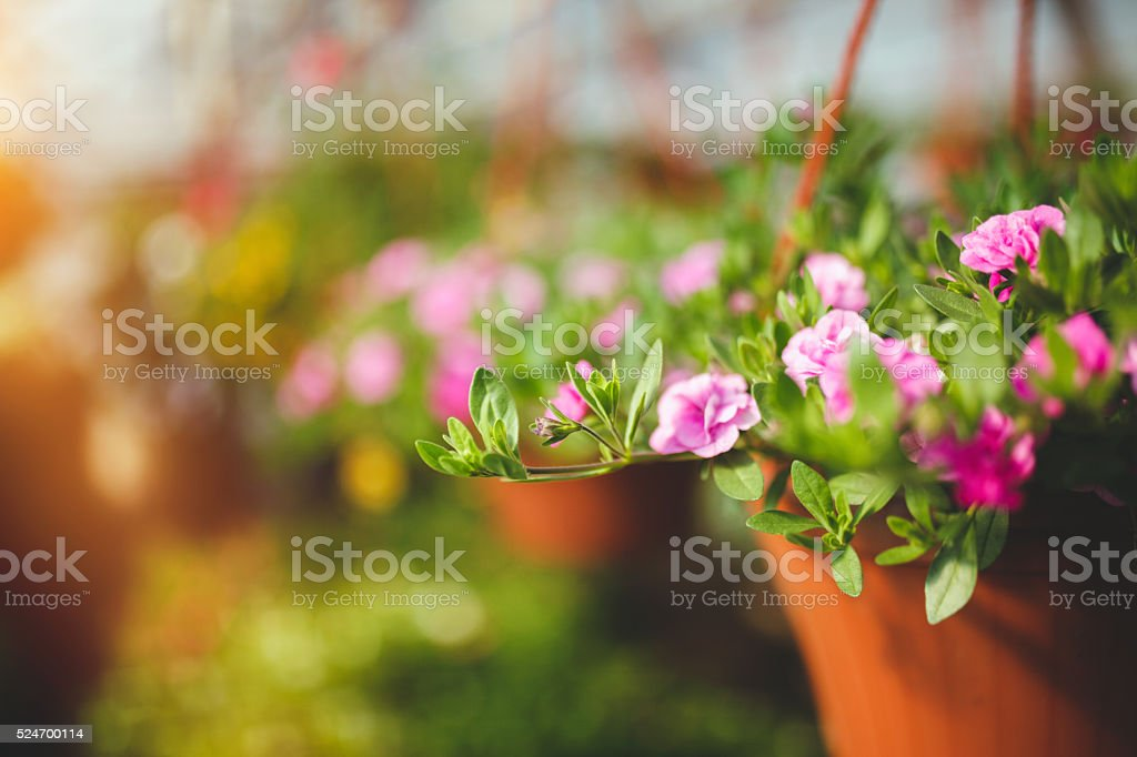 Flowers in plant nursery stock photo