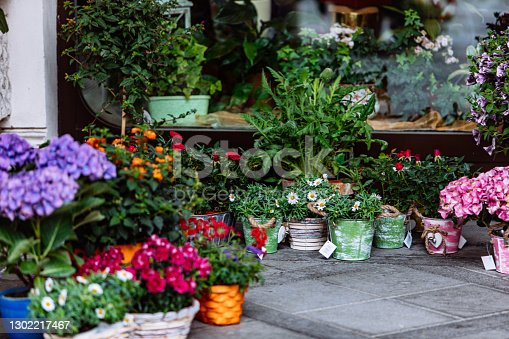 flowers in pots outdoors near shop copy space spring blooming time