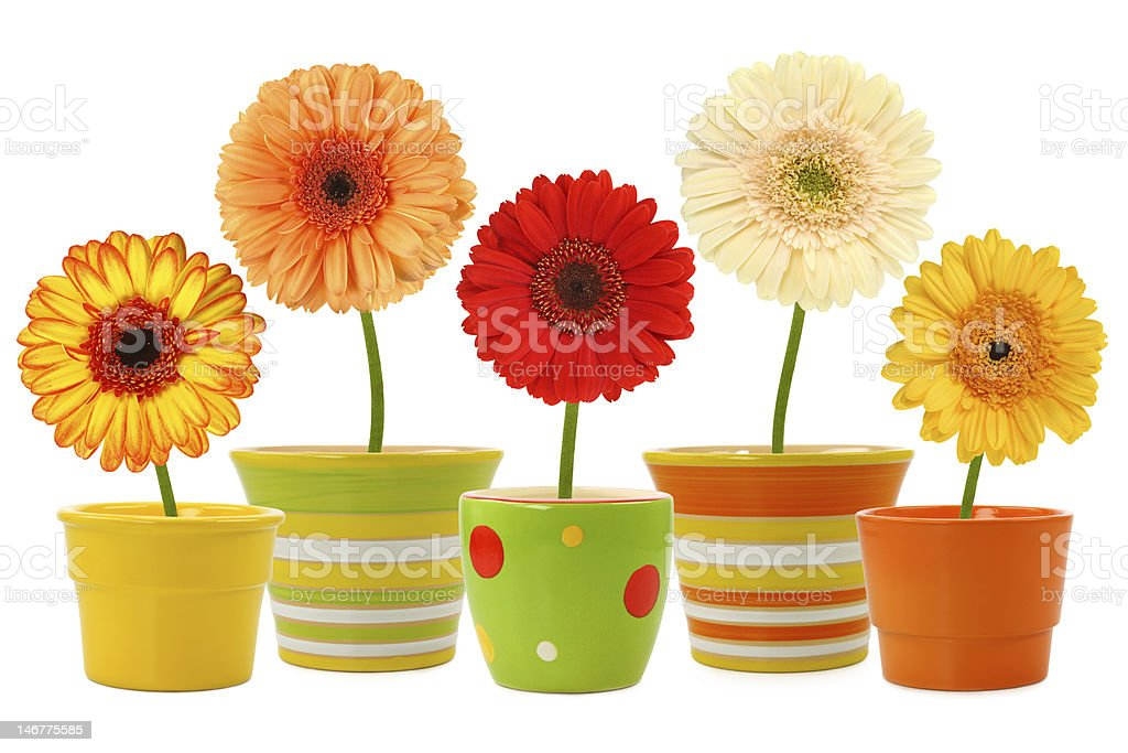Flowers In Pots Stock Photo Download Image Now Istock