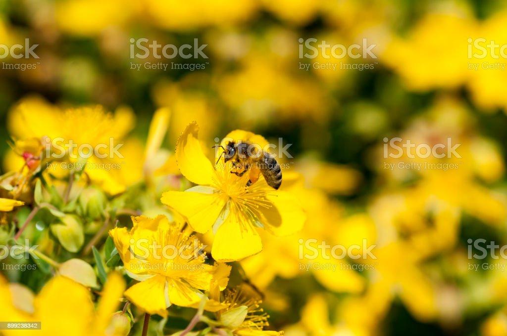 Blumen im Frühling und Sommer – Foto