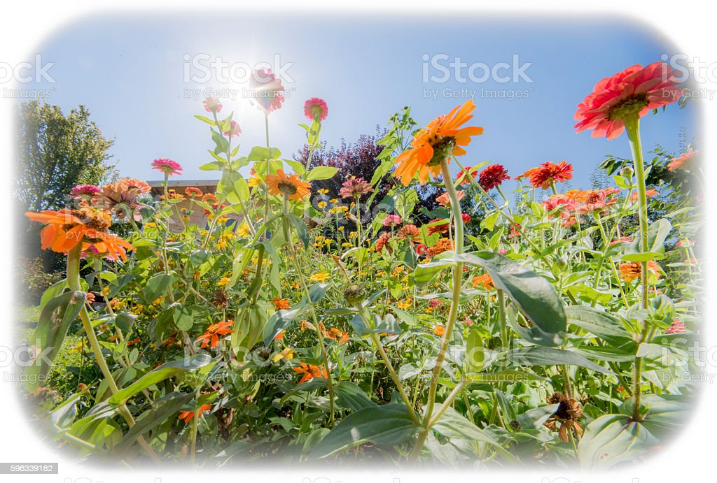 Flowers in sunshine royalty-free stock photo