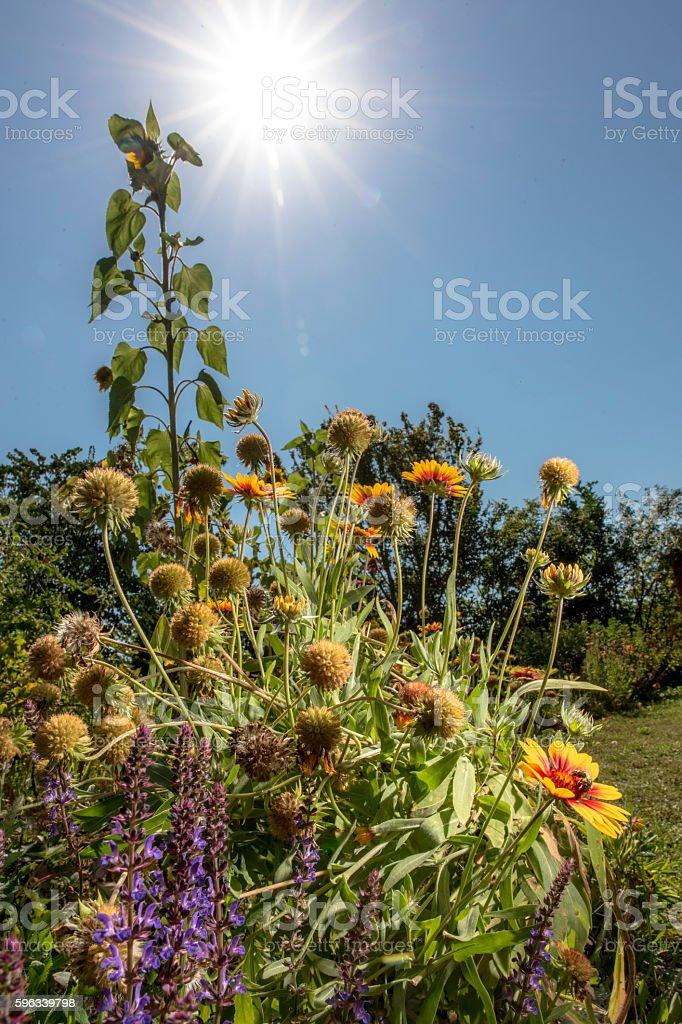 Blumen in der Sonne Lizenzfreies stock-foto