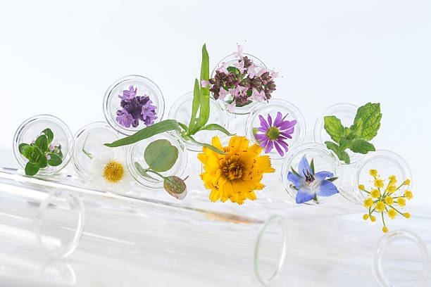 Flowers in test-tubes isolated on white stock photo