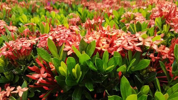 Blumen in Thailand – Foto