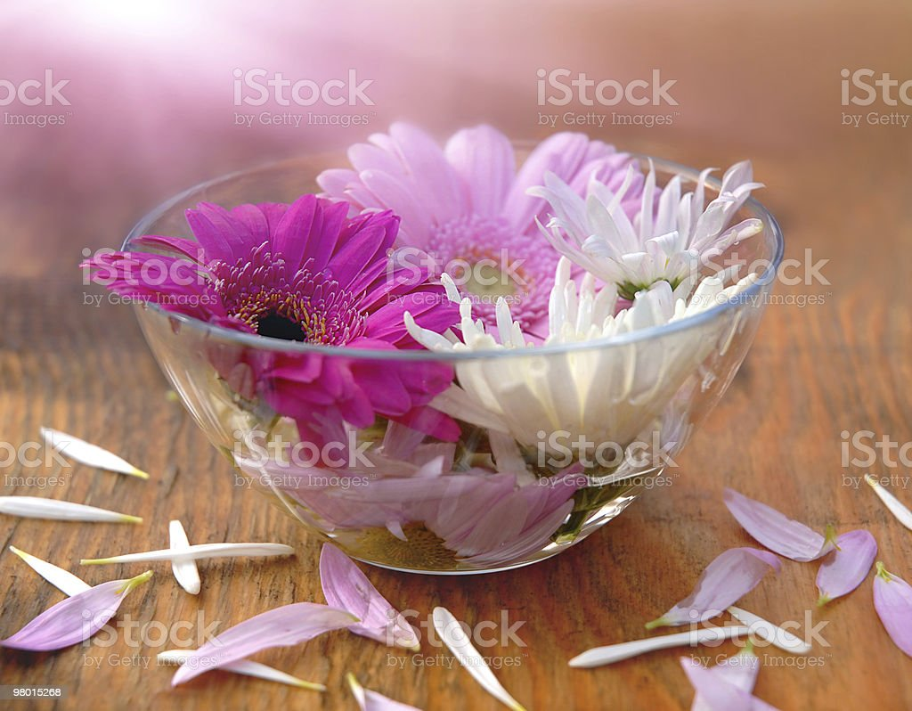 flowers in the bowl royalty-free stock photo