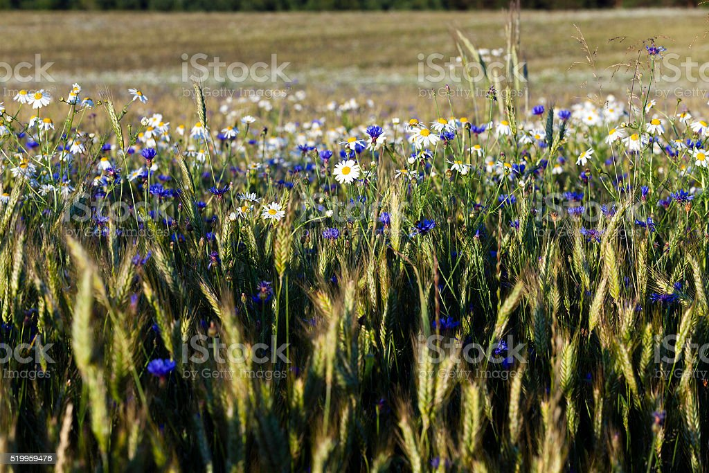 flowers in the field stock photo