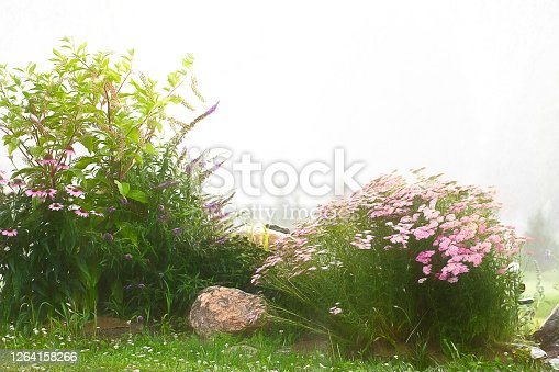 Flower bed with wild and cultivated flowers against the morning fog.