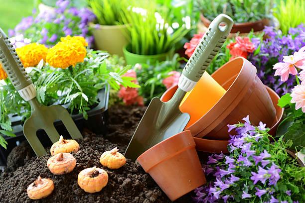 fleurs dans le jardin - plante à bulbe photos et images de collection