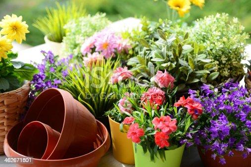 istock flowers in the garden 462671801