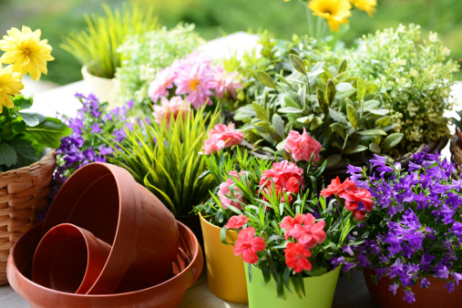 flowers in the gardenhttp://s44.radikal.ru/i104/1305/8d/0af9438704bf.jpg