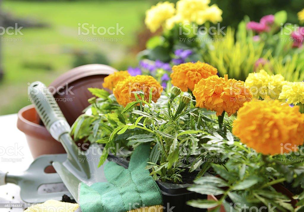 flowers in the garden stock photo