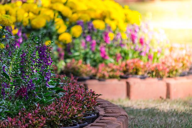 Flowers in the garden picture id534034062?b=1&k=6&m=534034062&s=612x612&w=0&h=or6fcgsnl98iwqanfxegdqlvci1msxugtzhzidkji3i=