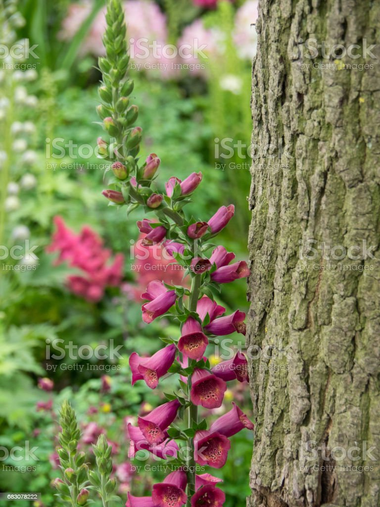 flowers in the garden foto de stock royalty-free