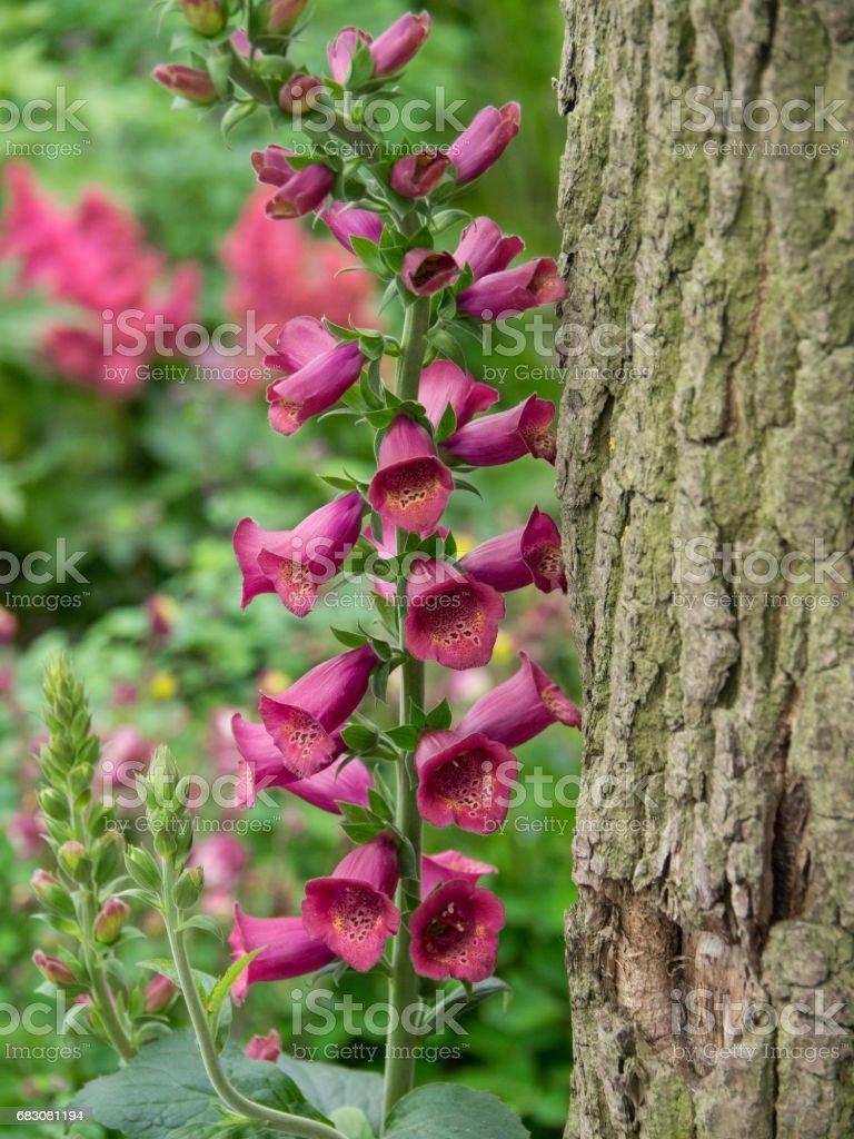 flowers in the garden foto de stock royalty-free