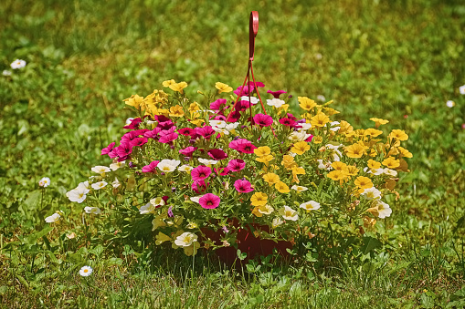 Flowers In The Garden Stock Photo - Download Image Now