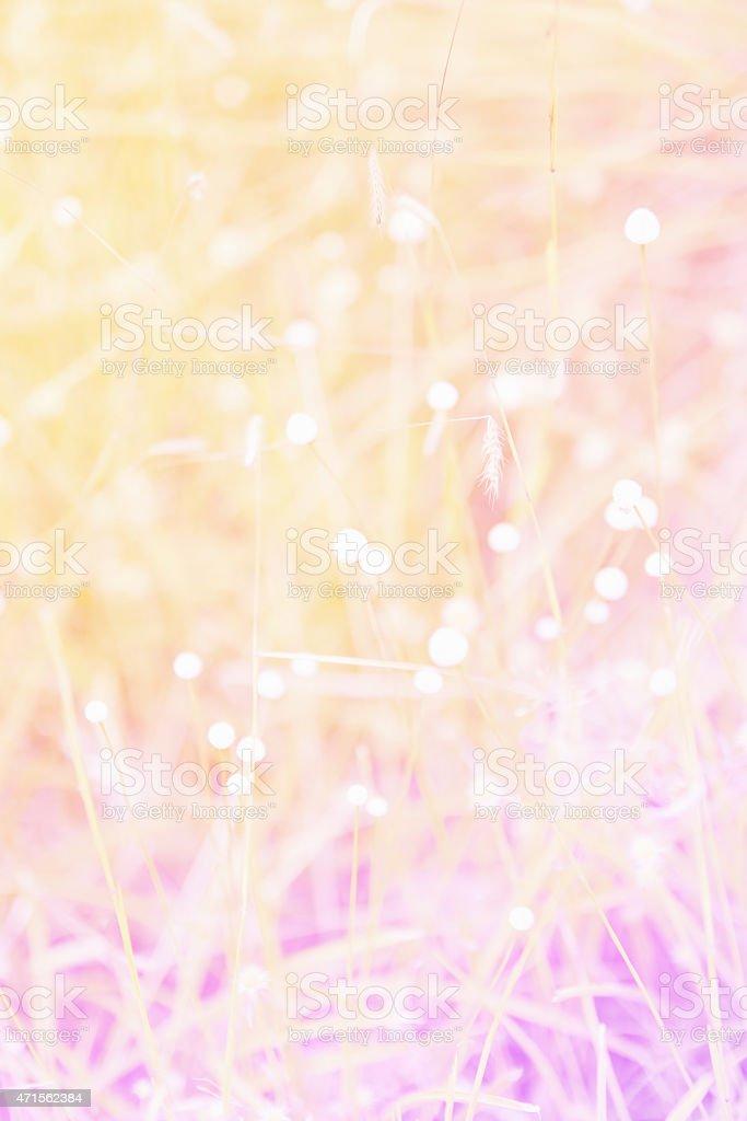 flowers in the garden soft blur background stock photo