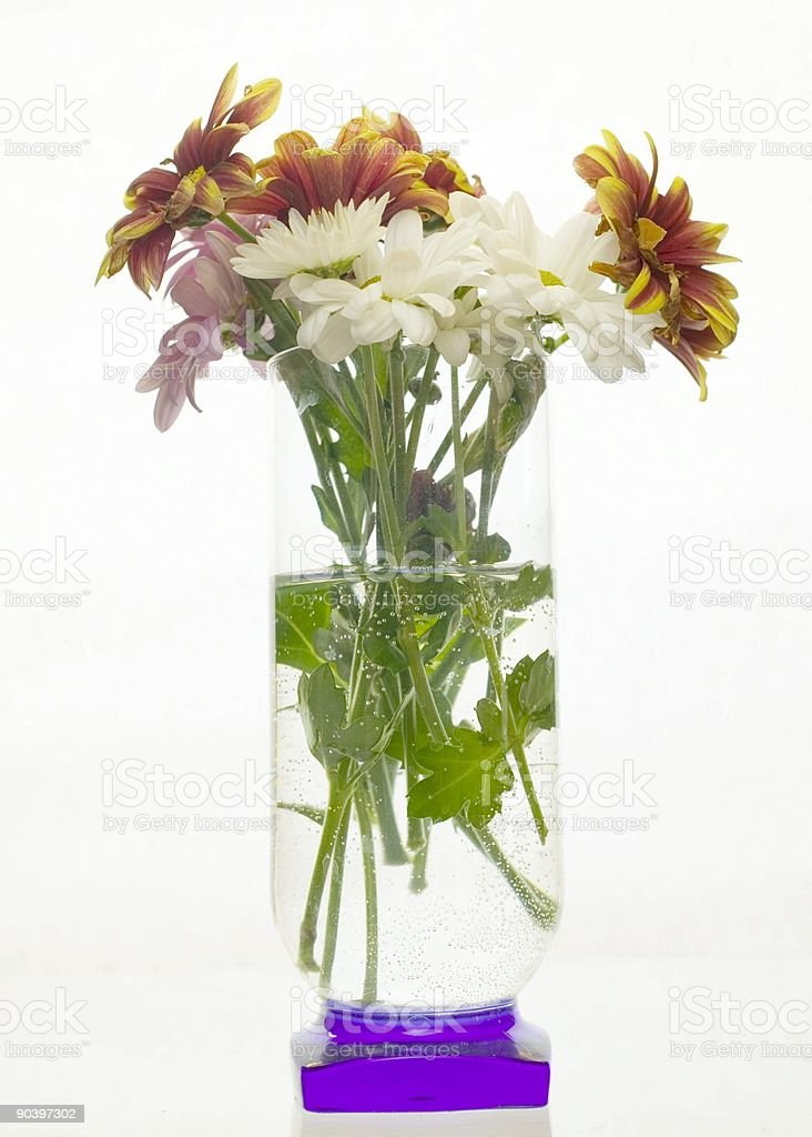 Flowers in the glass royalty-free stock photo