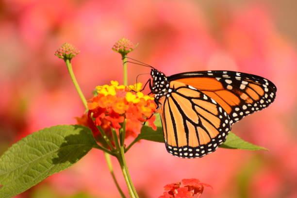 Flowers in the meadow picture id1083460802?b=1&k=6&m=1083460802&s=612x612&w=0&h=a 7cvm6uq09oxr011jljah61wcrut2ub torsdw4ufs=