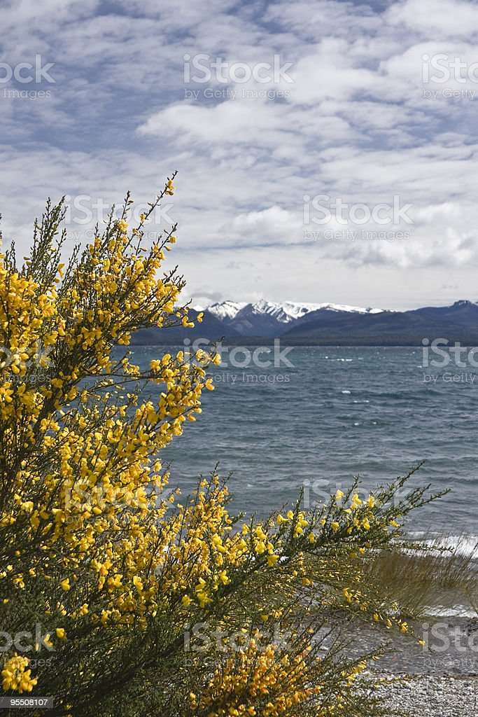 Flowers in the Nahuel royalty-free stock photo
