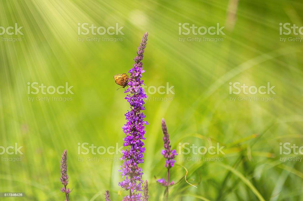 Blumen im Frühling – Foto