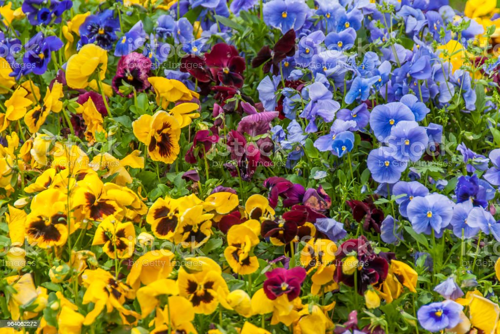 Flowers in Topkapi Palace - Royalty-free Agricultural Field Stock Photo