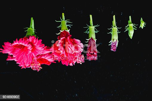 flowers in various stages from the new buds to the full bloom,in different stages of blooming.