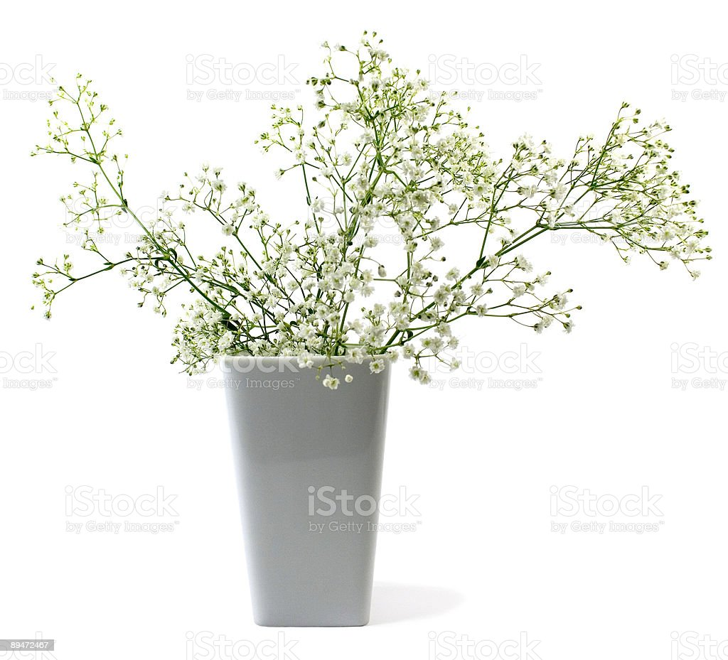 Blumen in vase Lizenzfreies stock-foto