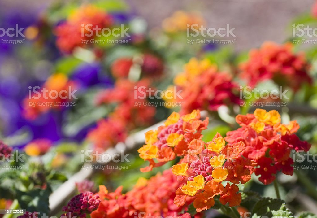 Flowers in vibrant colors stock photo
