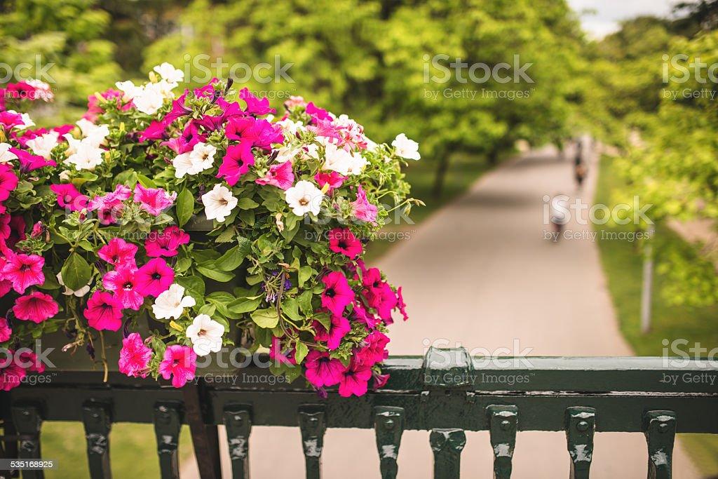 Flowers in Vondelpark - Amsterdam stock photo