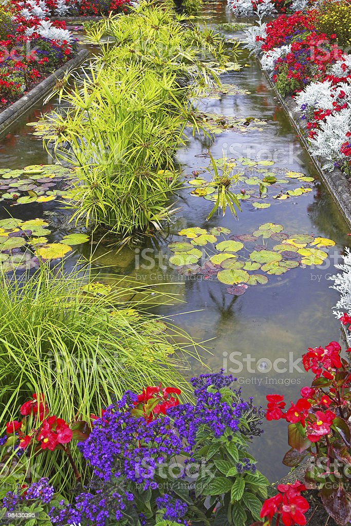 Flowers in water. royalty-free stock photo
