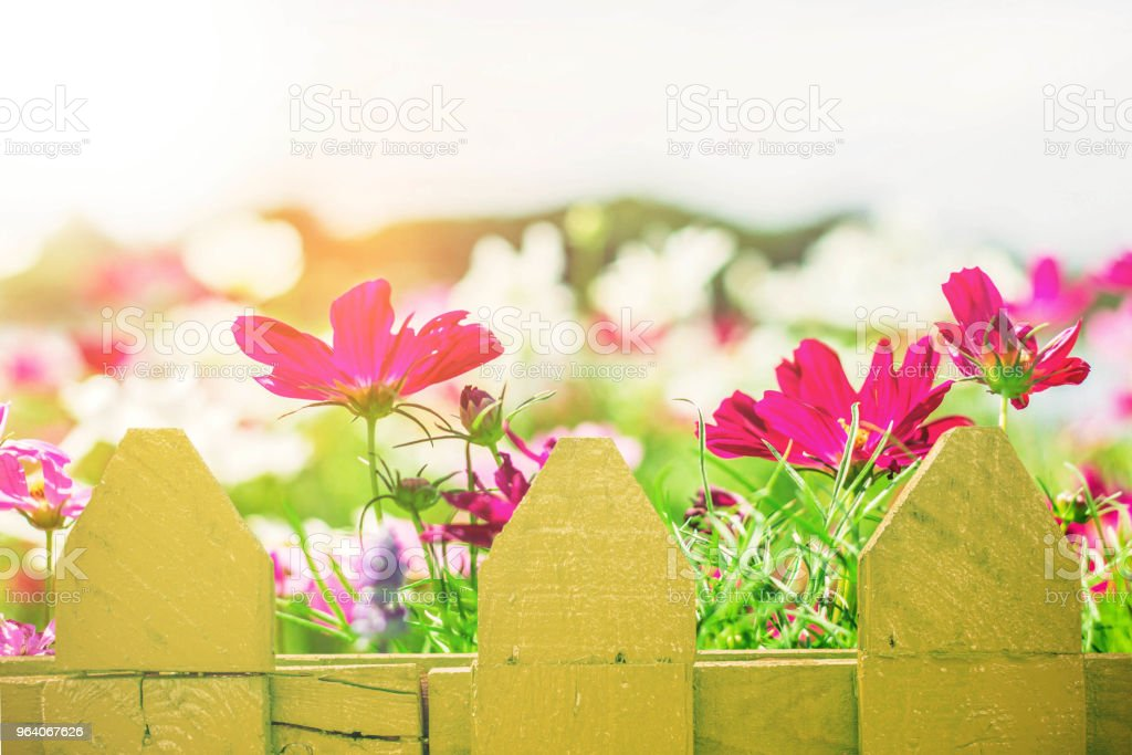 Flowers inside the park. - Royalty-free Agricultural Field Stock Photo