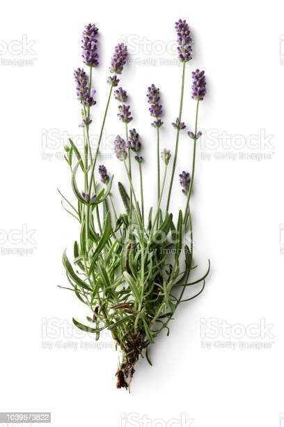 Flowers lavender isolated on white background picture id1039673822?b=1&k=6&m=1039673822&s=612x612&h=7fwufc2vx7xc xw h1ar5jjrlwnvjjfbp2r5kp vcs8=