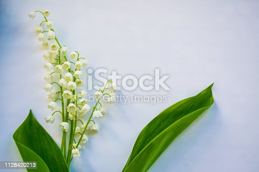 istock flowers lily of the valley 1128420213