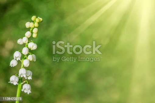 istock flowers lily of the valley 1128420273