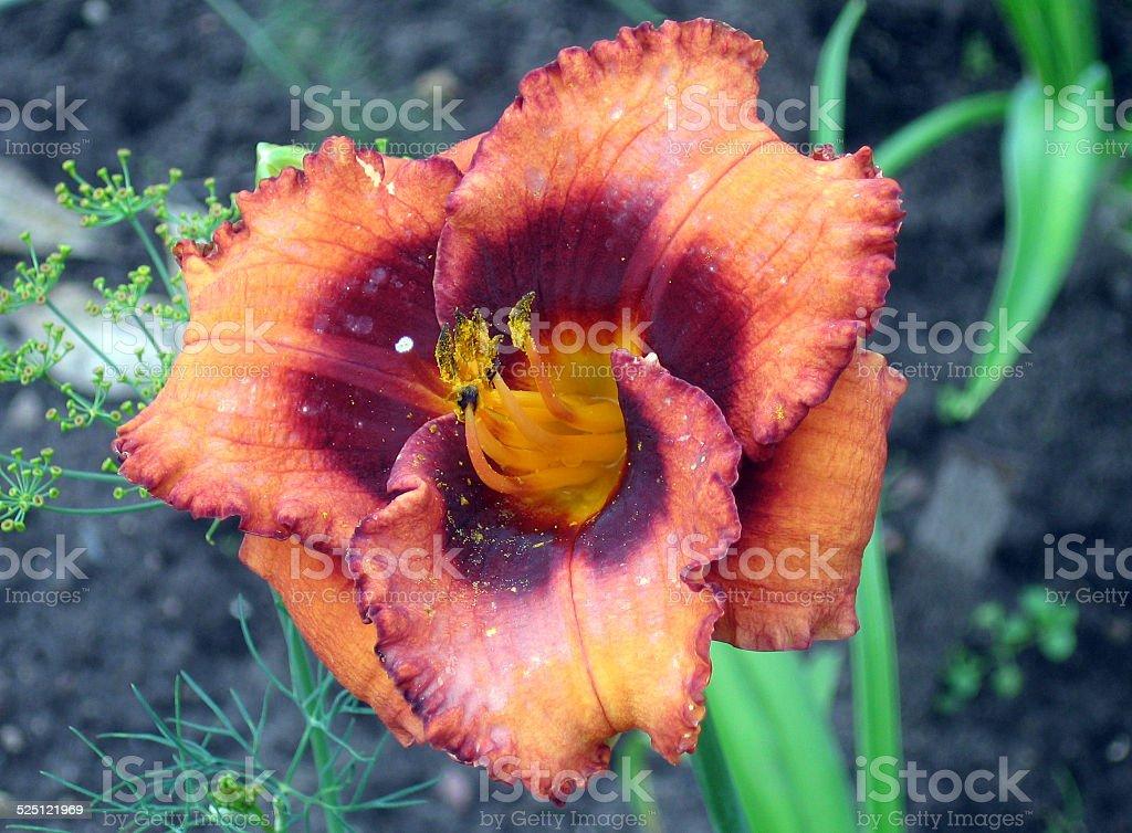 Flowers Madeline Nettles Eyes stock photo