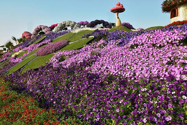 Flowers Matt at the Dubai Miracle garden,Dubai, UAE stock photo