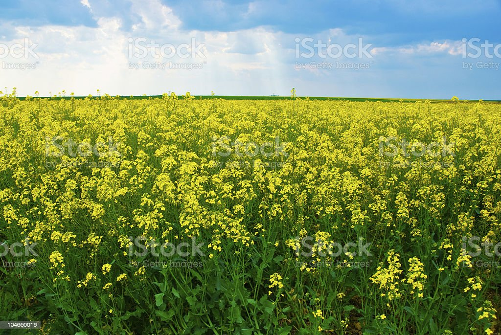Flowers meadow stock photo