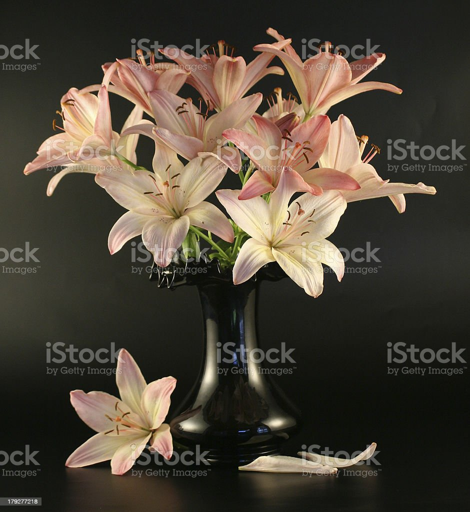 Flowers of a pink lily. royalty-free stock photo