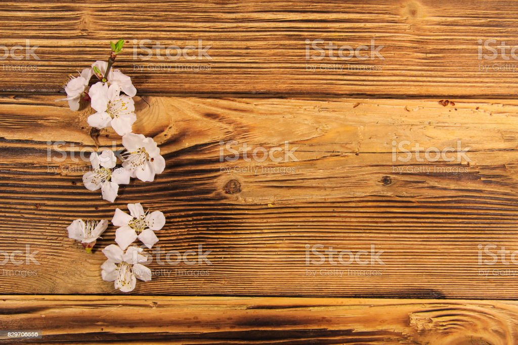 Flowers of apricot tree on wooden background stock photo