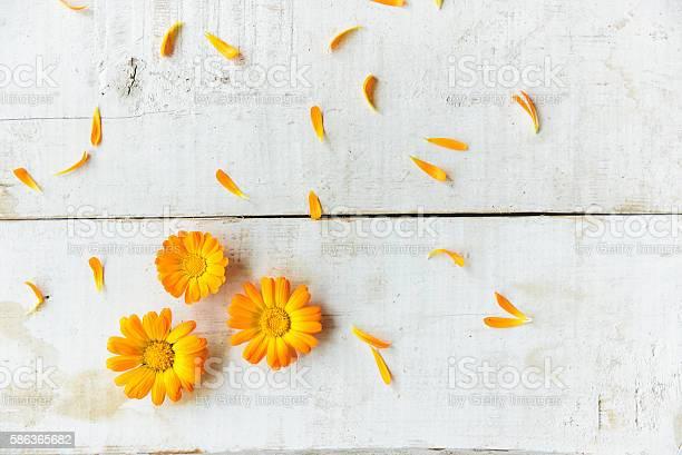 Flowers of calendula picture id586365682?b=1&k=6&m=586365682&s=612x612&h=q zbztprdmvrmsxgdik37adfojam74g8ghow5v djhs=
